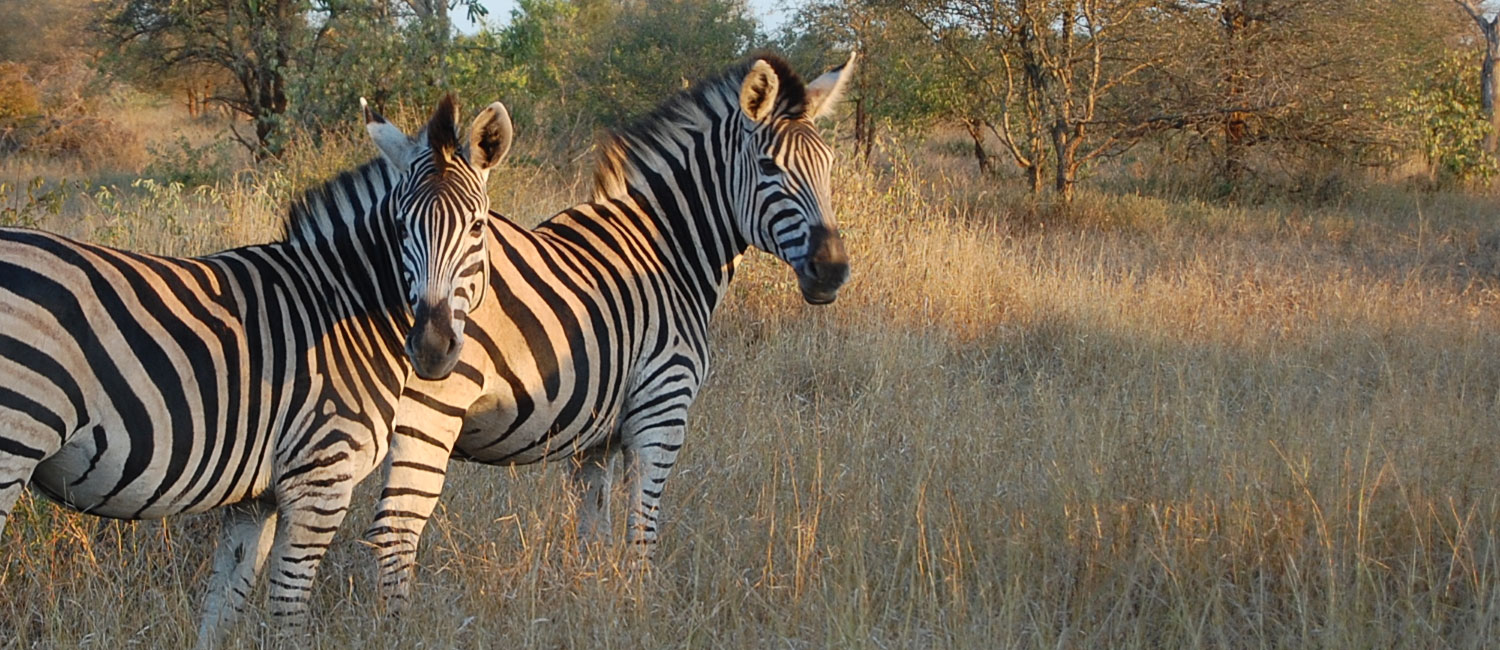 Kruger National Park Tour