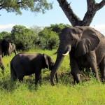 Elephant Safari Tour South Africa