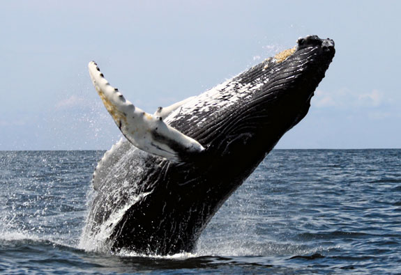 whale watching tours south africa