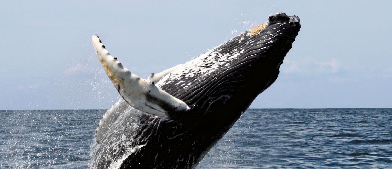 Whale Watching Tour Hermanus